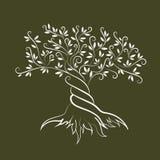 橄榄树概述卷毛剪影象 免版税库存照片