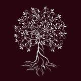 橄榄树概述卷毛剪影象 库存照片