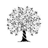 橄榄树概述卷毛剪影 免版税库存照片