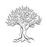 橄榄树概述在白色背景隔绝的剪影象 免版税库存照片