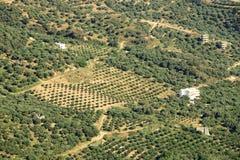 橄榄树种植园克利特,希腊,欧洲 免版税库存照片