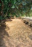 橄榄树种植园在11月的意大利乡下 库存照片