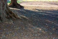 橄榄树种植园在11月的意大利乡下 库存图片