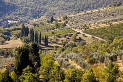 橄榄树顶视图反对山的在托斯卡纳在意大利 免版税库存照片