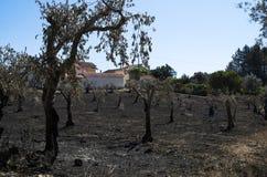 橄榄树领域在一个小村庄家-重创的Pedrogao烧了 库存照片