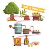 橄榄油产品的过程从耕种到完成品:生长树,收获,送到工厂 库存照片