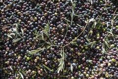 橄榄油产品 免版税库存照片