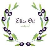 橄榄油标签、橄榄树枝花圈与绿色叶子和黑果子在白色 免版税库存图片