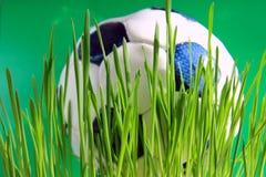 橄榄球草绿色 免版税库存照片