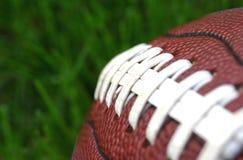 橄榄球草 免版税图库摄影