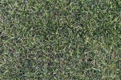 橄榄球从上面的草地 库存图片