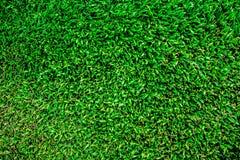 橄榄球/足球场新草背景,纹理 免版税库存照片