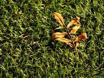 橄榄球playfield 室外足球操场,可怜的草在与下落的叶子的季节结束时 库存照片