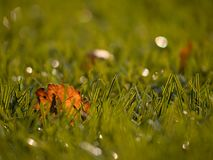 橄榄球playfield 室外足球操场,可怜的草在与下落的叶子的季节结束时 免版税图库摄影