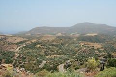 橄榄色域在克利特 免版税库存图片