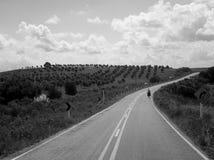 橄榄色域 免版税库存图片