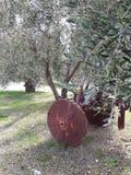 橄榄色工厂 免版税图库摄影