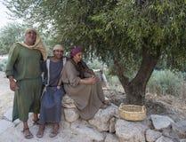 橄榄色收获 库存图片