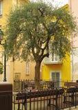 橄榄色方形结构树 图库摄影