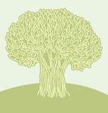 橄榄色海报结构树 免版税库存照片