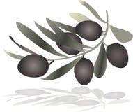 橄榄色的小树枝铸件阴影 免版税库存图片