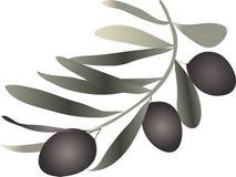 橄榄色的小树枝 免版税库存照片
