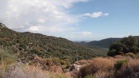 橄榄色的森林看法有云彩的在背景的天空 股票录像