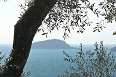 橄榄色的植物在与利古里亚海的背景中 在拉斯佩齐亚海湾拍摄的橄榄色的叶子有背景  库存照片