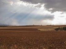 橄榄色的领域、呈绿色风景agaisnt蓝天和太阳,西班牙语 免版税库存照片