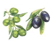 橄榄色的水彩绘画水彩 皇族释放例证