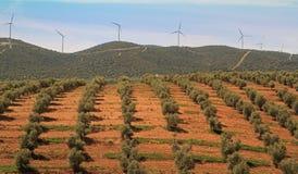橄榄色种田和风车在安大路西亚,西班牙 库存图片