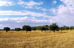 橄榄色s结构树 库存照片