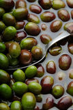 橄榄 免版税库存照片