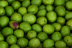 橄榄18 免版税库存图片
