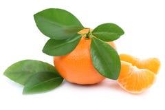 橘子果子与被隔绝的叶子的蜜桔切片 库存照片