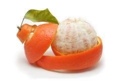 橘栾果 免版税图库摄影