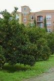 橙树和公寓 免版税库存照片