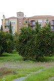 橙树和公寓 免版税图库摄影