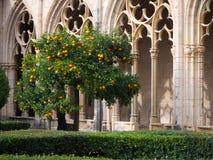 橙树在中世纪修道院里 免版税库存图片