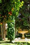 橙树在露台 免版税库存照片