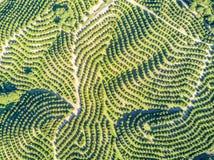 橙树树丛鸟瞰图小山的 图库摄影