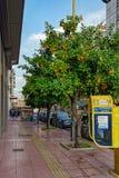 橙树用果子在冬天 免版税库存图片