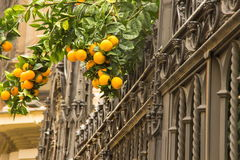 橙树用果子在格拉纳达 免版税库存图片