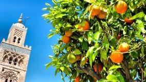 橙树, Koutoubia清真寺,马拉喀什 免版税图库摄影