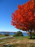 橙红秋天树秋天在Kittery缅因 免版税库存照片