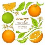 橙色元素集 向量例证