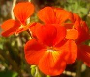 橙色充满活力 库存照片