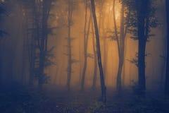 橙色光通过薄雾在森林里 库存图片