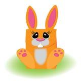 橙色兔宝宝 包装的礼物草 库存照片