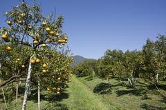 橙色农场 免版税库存图片